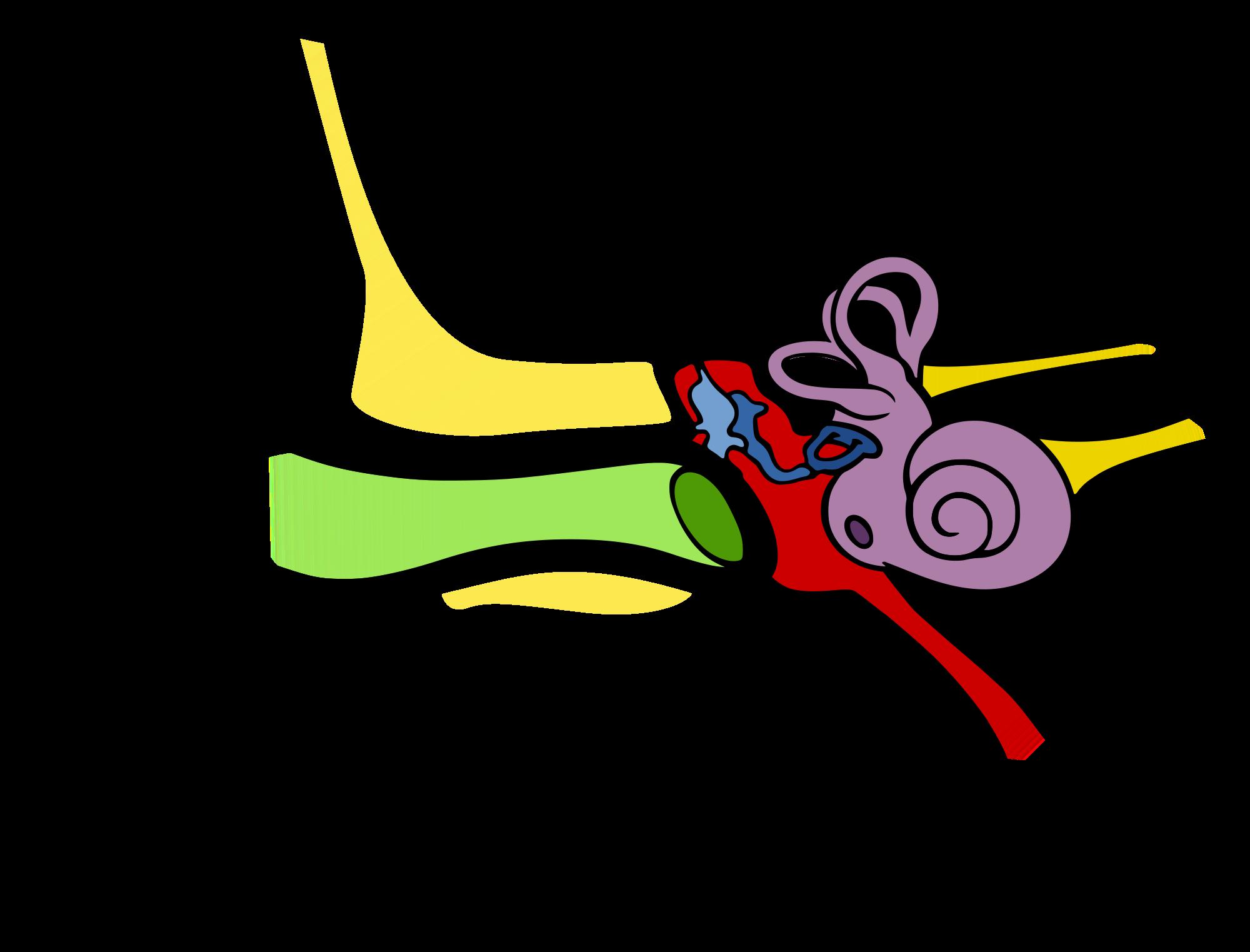 Tympanostomia (założenie drenażu wentylacyjnego uszu)